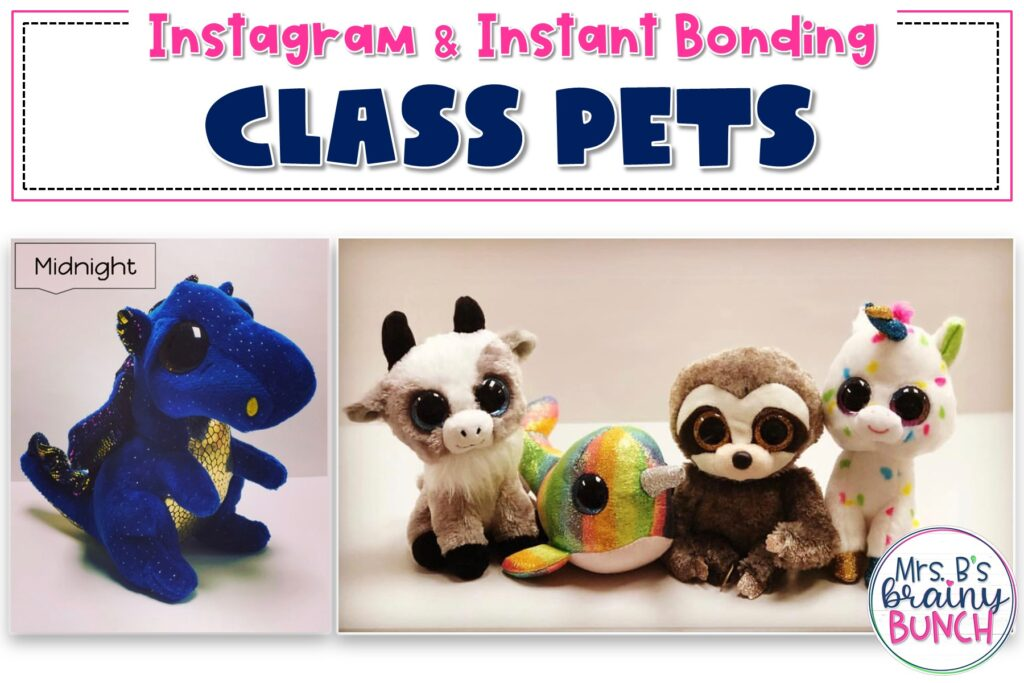 five plush animals used as class pets