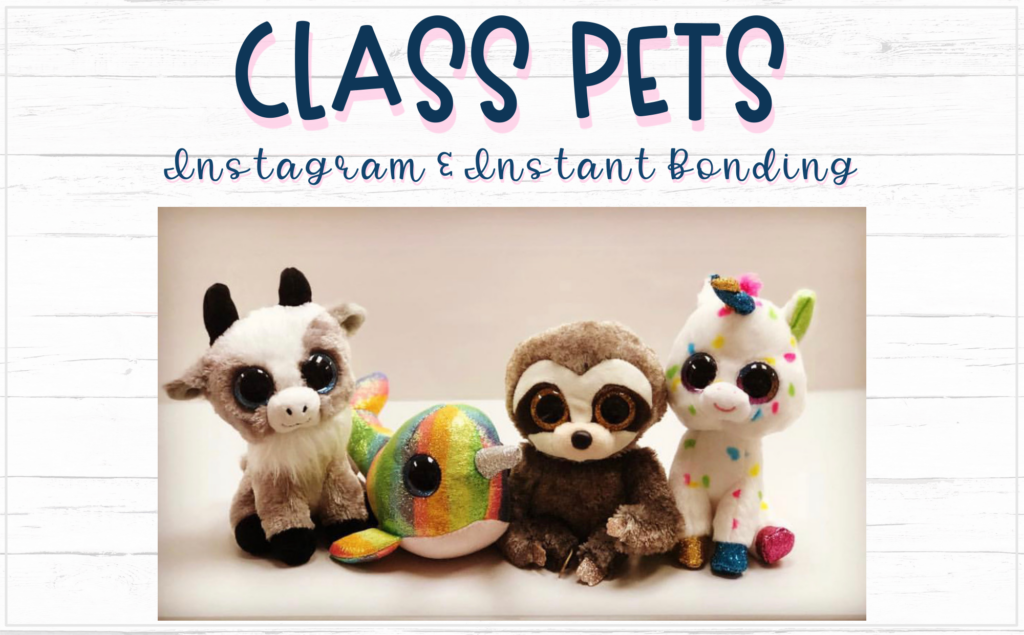 blog image of 4 plush stuffed animals used as Class Pets to build community in your middle school classroom