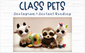 pics of 4 plush stuffed animals used as Class Pets